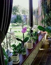 Услуги по уходу за комнатными цветами,  оранжереей и зимним садом