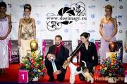Хендлер Днепропетровск. Подготовка собаки к выставкам