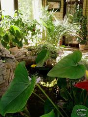 Фитодизайн,  озеленение дома и офиса