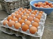 Продам лотки для куриных яиц б у