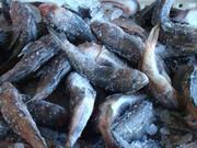 Бычок свежемороженный в брикетах