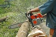Обрезка деревьев: обрезка яблонь,  обрезка сада,  обрезка деревьев  в Днепропетровске,  обрезка плодовых деревьев.