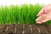 Устройство посевного газона или укладка рулонного газона Днепропетровс
