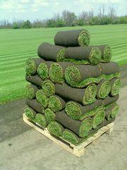 Рулонный газон,  укладка газона,  продажа газона