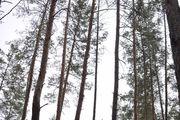 Участок в Орловщине сосна на участке река рядом