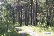 Продам участок с лесом в Орловщине