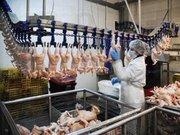 Работник на куриный мясокомбинат (Польша)