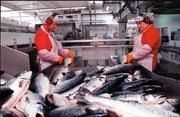 Разнорабочий на рыбный завод (Польша)