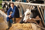 На ферму в Латвию нужны мужчины по уходу за скотом!