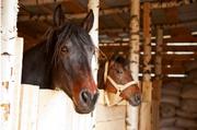 Работа с лошадьми (Польша)