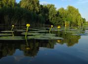Участки 14;  20 соток на берегу реки Орель.